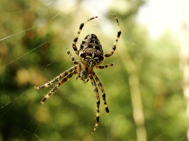 pavouk a pavučina